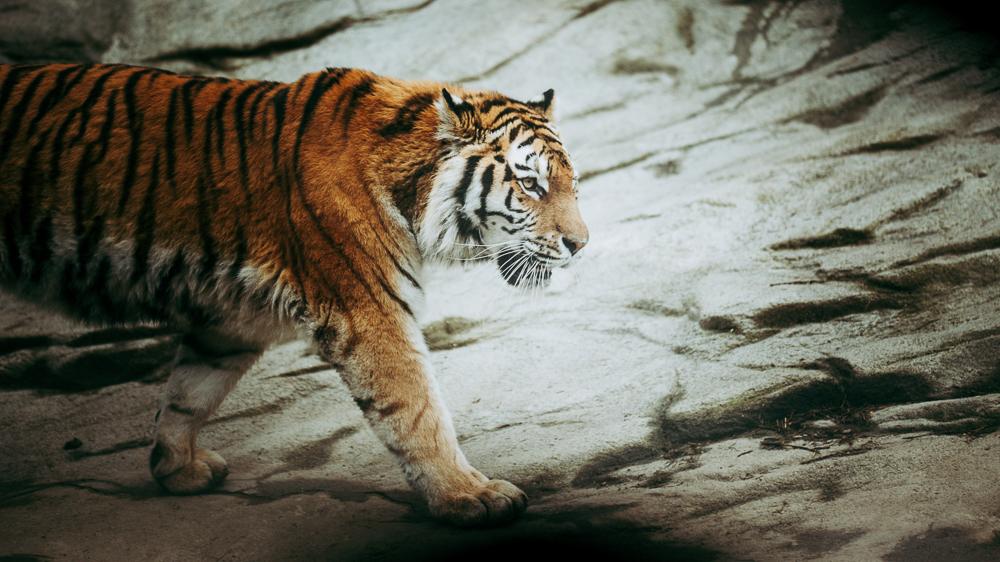 Züri Zoo