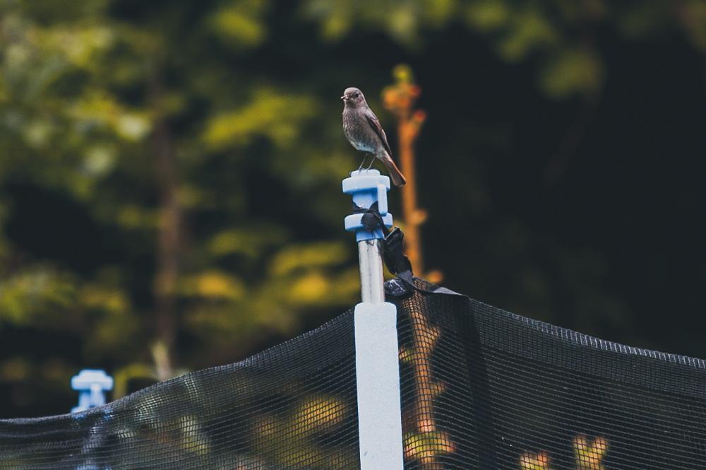 Wir haben einen Vogel