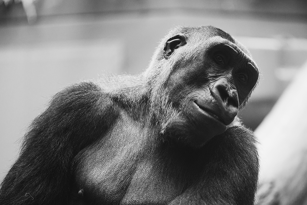 Bei den Affen